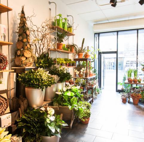 Notre Boutique Fauchois Fleurs/Our Shop Fauchois Fleurs