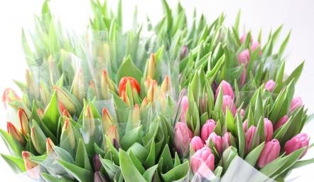Arrivée des tulipes de l'Ile de Prince Édouard