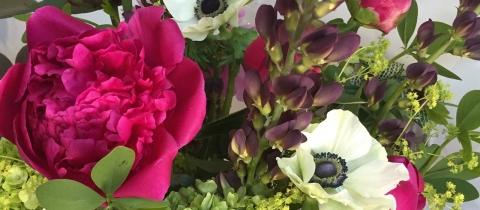 anemone-pivoine